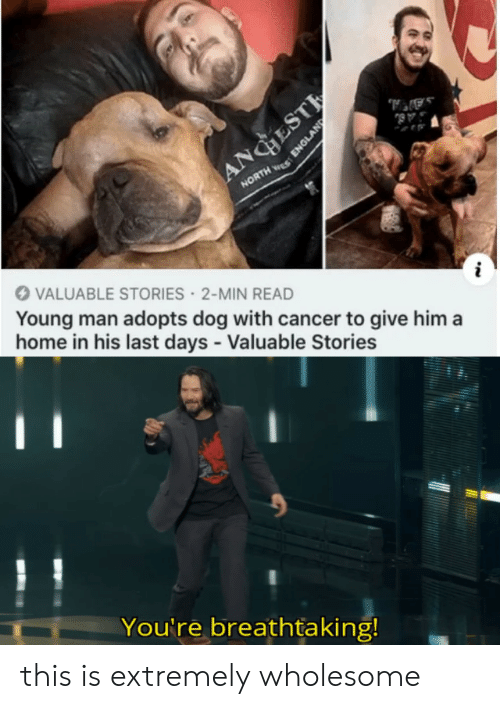 England, Cancer, and Home: AA,  AB  ANGESTE  NORTH S  VALUABLE STORIES 2-MIN READ  Young man adopts dog with cancer to give him a  home in his last days - Valuable Stories  You're breathtaking!  ENGLAND this is extremely wholesome