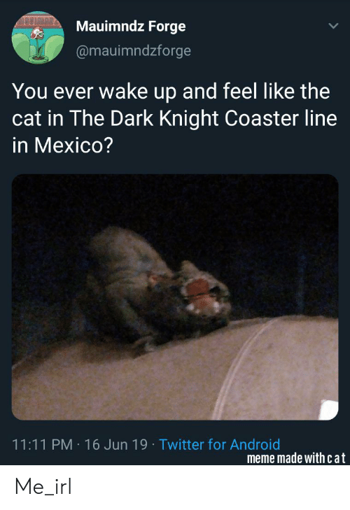 Android, Meme, and Twitter: AAUIMAB  Mauimndz Forge  @mauimndzforge  You ever wake up and feel like the  cat in The Dark Knight Coaster line  in Mexico?  11:11 PM 16 Jun 19 Twitter for Android  meme made with cat Me_irl