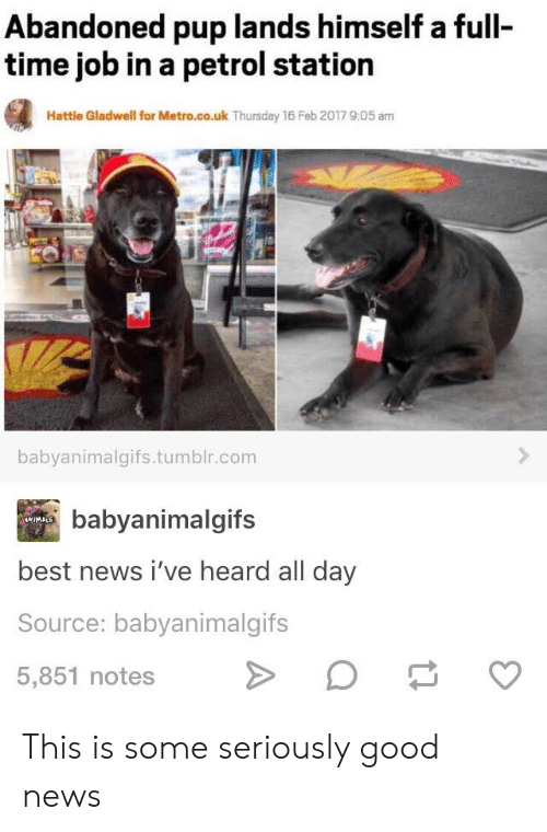 News, Tumblr, and Best: Abandoned pup lands himself a full  time job in a petrol station  Hattle Gladwell for Metro.co.uk Thursday 16 Feb 2017 9:05 am  babyanimalgifs.tumblr.com  babyanimalgifs  4WIMALS  best news i've heard all day  Source: babyanimalgifs  5,851 notes This is some seriously good news