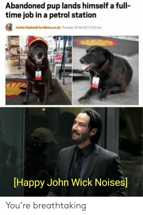 John Wick, Happy, and Metro: Abandoned pup lands himself a full-  time job in a petrol station  Hattle Gladwell for Metro.co.uk Thursday 16 Feb 2017 905 am  Happy John Wick Noises] You're breathtaking