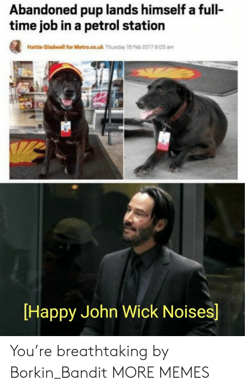 Dank, John Wick, and Memes: Abandoned pup lands himself a full-  time job in a petrol station  Hattle Gladwell for Metro.co.uk Thursday 16 Feb 2017 905 am  Happy John Wick Noises] You're breathtaking by Borkin_Bandit MORE MEMES