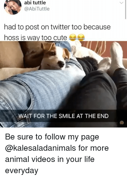 aby: abi tuttle  @AbiTuttle  had to post on twitter too because  hoss is way too cute  WAIT FOR THE SMILE AT THE END Be sure to follow my page @kalesaladanimals for more animal videos in your life everyday