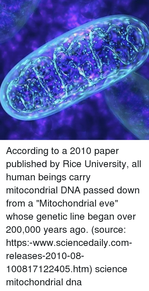 "Bailey Jay, Memes, and Science: According to a 2010 paper published by Rice University, all human beings carry mitocondrial DNA passed down from a ""Mitochondrial eve"" whose genetic line began over 200,000 years ago. (source: https:-www.sciencedaily.com-releases-2010-08-100817122405.htm) science mitochondrial dna"