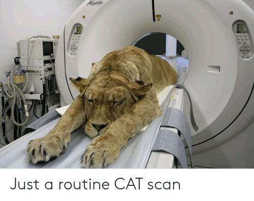 Scan: Acpuilion Just a routine CAT scan