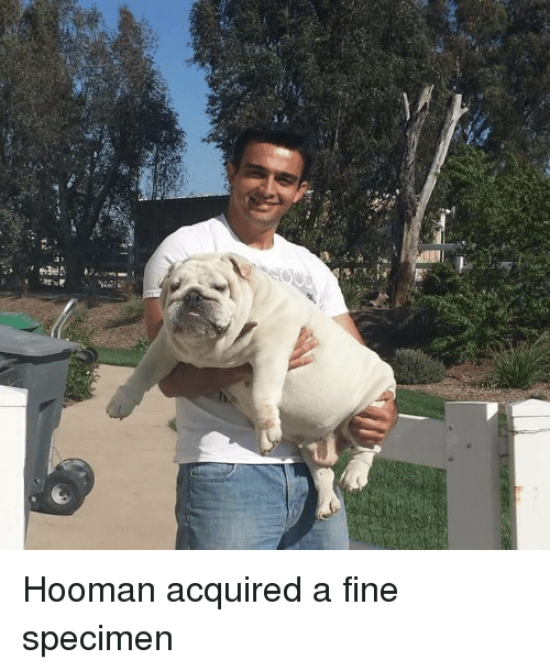 Hoomans: acR: Hooman acquired a fine specimen
