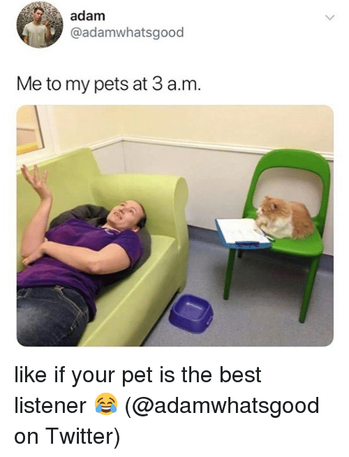 Memes, Twitter, and Best: adam  @adamwhatsgood  Me to my pets at 3 a.m like if your pet is the best listener 😂 (@adamwhatsgood on Twitter)