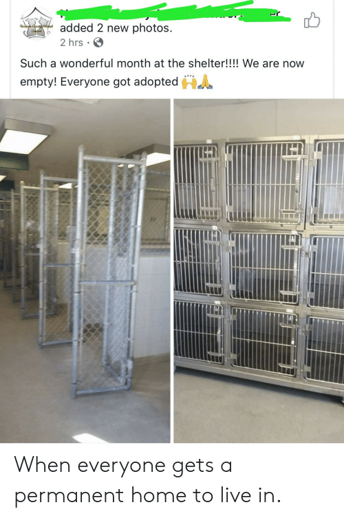 Home, Live, and Got: added 2 new photos  arison Countcthimal  ContelG  2 hrs  Such a wonderful month at the shelter!!!! We are now  HA  empty! Everyone got adopted When everyone gets a permanent home to live in.