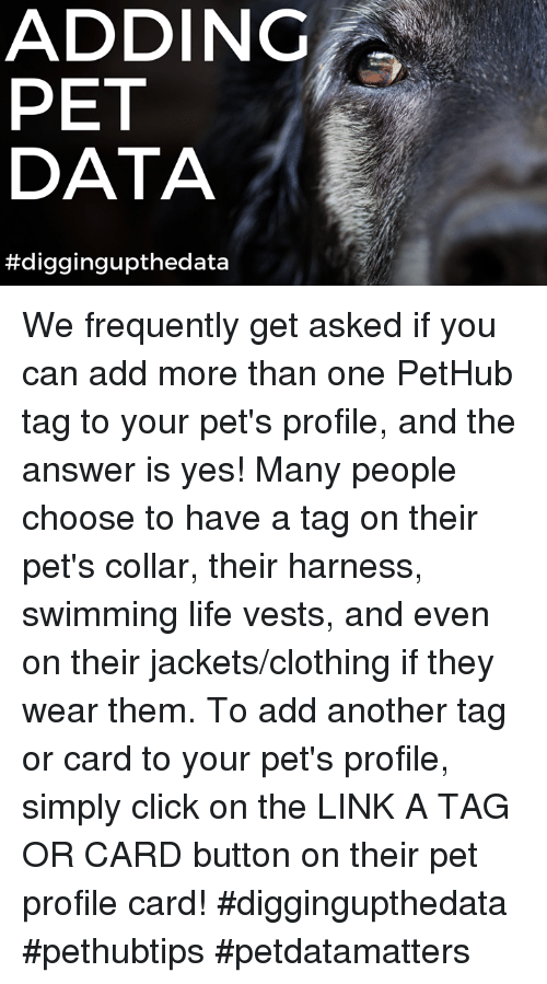 Click, Life, and Memes: ADDING  PET  DATA  We frequently get asked if you can add more than one PetHub tag to your pet's profile, and the answer is yes!  Many people choose to have a tag on their pet's collar, their harness, swimming life vests, and even on their jackets/clothing if they wear them.  To add another tag or card to your pet's profile, simply click on the LINK A TAG OR CARD button on their pet profile card!  #diggingupthedata #pethubtips #petdatamatters