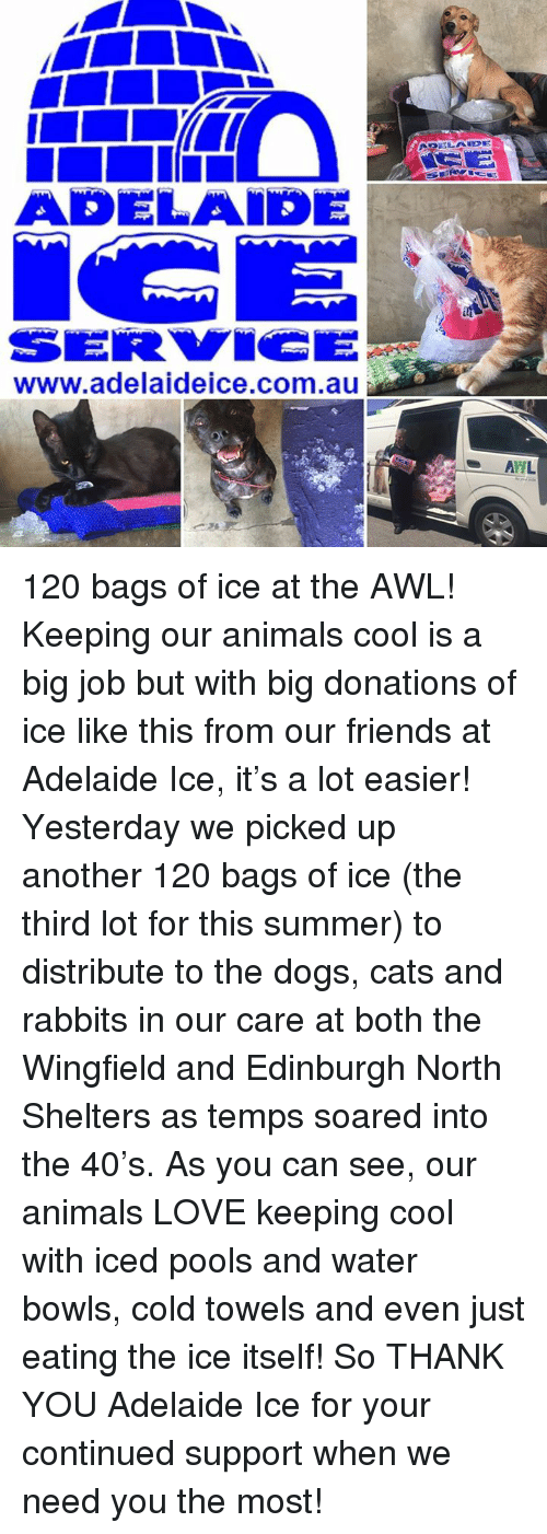 Memes, 🤖, and Ahl: ADELAIDE  www.adelaideice.com.au  AHL 120 bags of ice at the AWL!  Keeping our animals cool is a big job but with big donations of ice like this from our friends at Adelaide Ice, it's a lot easier!  Yesterday we picked up another 120 bags of ice (the third lot for this summer) to distribute to the dogs, cats and rabbits in our care at both the Wingfield and Edinburgh North Shelters as temps soared into the 40's.  As you can see, our animals LOVE keeping cool with iced pools and water bowls, cold towels and even just eating the ice itself!  So THANK YOU Adelaide Ice for your continued support when we need you the most!