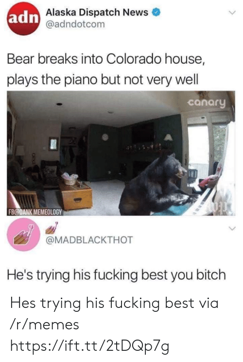 Bitch, Dank, and Fucking: adn  Alaska Dispatch News  @adndotcom  Bear breaks into Colorado house,  plays the piano but not very wel  canary  FB@DANK MEMEOLOGY  @MADBLACKTHOT  He's trying his fucking best you bitch Hes trying his fucking best via /r/memes https://ift.tt/2tDQp7g