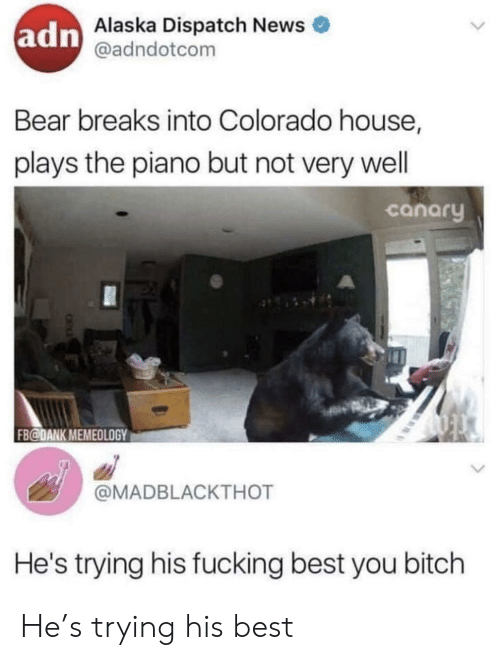 Bitch, Dank, and Fucking: adn  Alaska Dispatch News  @adndotcom  Bear breaks into Colorado house,  plays the piano but not very well  canary  FB@DANK MEMEOLOGY  @MADBLACKTHOT  He's trying his fucking best you bitch He's trying his best