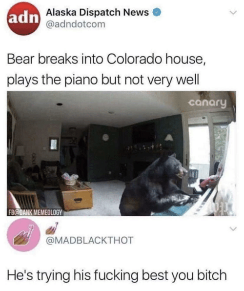 Bitch, Dank, and Fucking: adn  Alaska Dispatch News  @adndotcom  Bear breaks into Colorado house,  plays the piano but not very well  canary  FB@DANK MEMEOLOGY  @MADBLACKTHOT  He's trying his fucking best you bitch