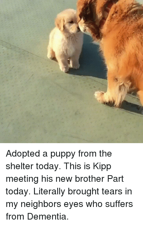Dementia, Neighbors, and Puppy: Adopted a puppy from the shelter today. This is Kipp meeting his new brother Part today. Literally brought tears in my neighbors eyes who suffers from Dementia.