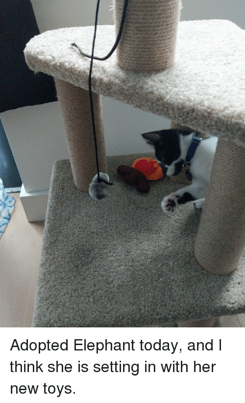 Elephant, Today, and Toys: Adopted Elephant today, and I think she is setting in with her new toys.