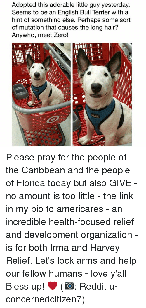 Bless Up, Love, and Memes: Adopted this adorable little guy yesterday.  Seems to be an English Bull Terrier with a  hint of something else. Perhaps some sort  of mutation that causes the long hair?  Anywho, meet Zero! Please pray for the people of the Caribbean and the people of Florida today but also GIVE - no amount is too little - the link in my bio to americares - an incredible health-focused relief and development organization - is for both Irma and Harvey Relief. Let's lock arms and help our fellow humans - love y'all! Bless up! ❤️ (📷: Reddit u-concernedcitizen7)