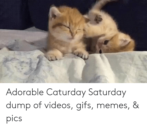 Caturday: Adorable Caturday Saturday dump of videos, gifs, memes, & pics