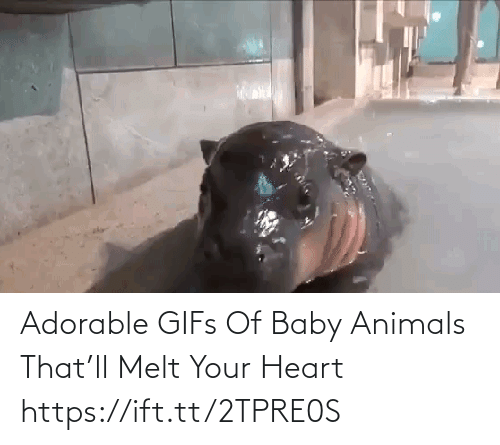 Animals: Adorable GIFs Of Baby Animals That'll Melt Your Heart https://ift.tt/2TPRE0S