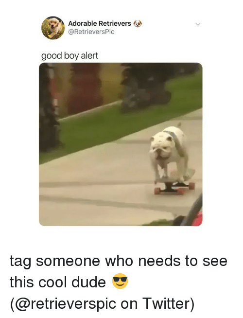 Dude, Memes, and Twitter: Adorable Retrievers  @RetrieversPic  good boy alert tag someone who needs to see this cool dude 😎 (@retrieverspic on Twitter)