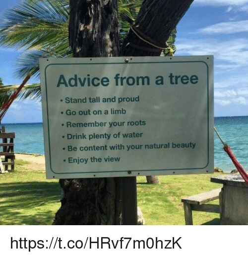 Advice, Memes, and The View: Advice from a tree  e Stand tall and proud  e Go out on a limb  . Remember your roots  . Drink plenty of water  Be content with your natural beauty  Enjoy the view https://t.co/HRvf7m0hzK