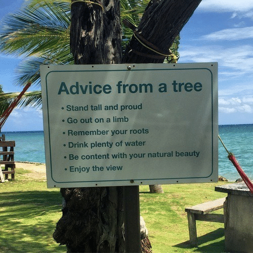 Enjoy The: Advice from a tree  Stand tall and proud  Go out on a limb  Remember your roots  Drink plenty of water  Be content with your natural beauty  Enjoy the view