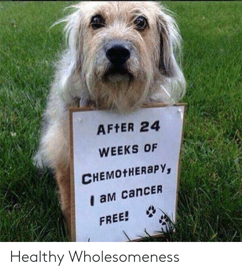 Af, Cancer, and Free: AF ER 24  WEEKS OF  CHEMOTHERAPY,  I aM canCER  FREE! Healthy Wholesomeness