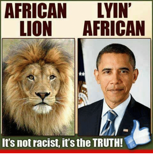 Memes, Lion, and Racist: AFRICAN LYIN  LION AFRICAN  It's not racist, it's the TRUTH!