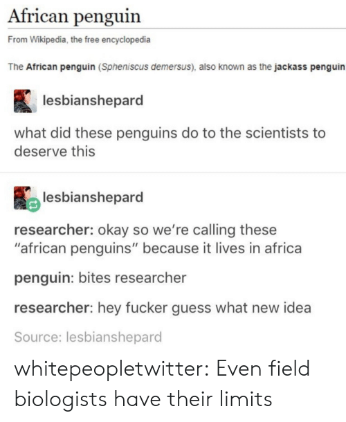 "Africa, Tumblr, and Wikipedia: African penguin  From Wikipedia, the free encyclopedia  The African penguin (Spheniscus demersus), also known as the jackass penguin  lesbianshepard  what did these penguins do to the scientists to  deserve this  lesbianshepard  researcher: okay so we're calling these  ""african penguins"" because it lives in africa  penguin: bites researcher  researcher: hey fucker guess what new idea  Source: lesbianshepard whitepeopletwitter:  Even field biologists have their limits"