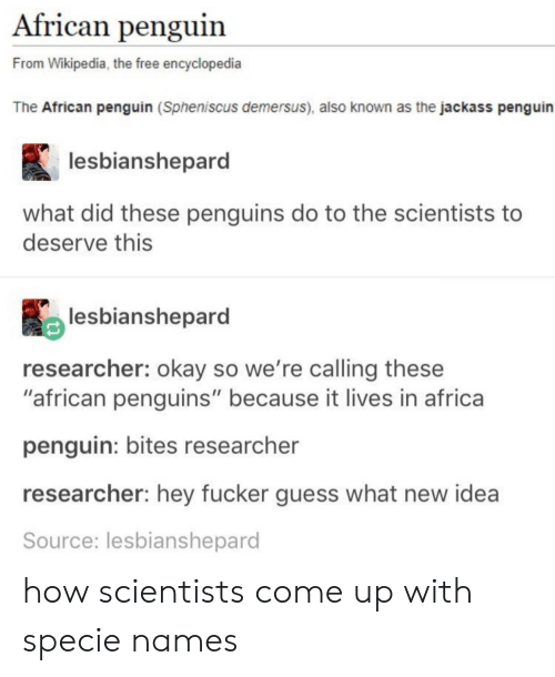 "Africa, Wikipedia, and Free: African penguin  From Wikipedia, the free encyclopedia  The African penguin (Spheniscus demersus), also known as the jackass penguin  lesbianshepard  what did these penguins do to the scientists to  deserve this  lesbianshepard  researcher: okay so we're calling these  ""african penguins"" because it lives in africa  penguin: bites researcher  researcher: hey fucker guess what new idea  Source: lesbianshepard how scientists come up with specie names"
