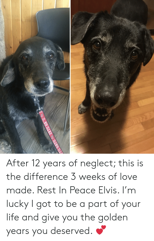 Life, Love, and Peace: After 12 years of neglect; this is the difference 3 weeks of love made. Rest In Peace Elvis. I'm lucky I got to be a part of your life and give you the golden years you deserved. 💕