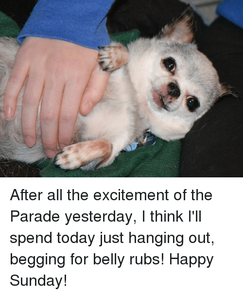 Memes, Excite, and Sunday: After all the excitement of the Parade yesterday, I think I'll spend today just hanging out, begging for belly rubs!  Happy Sunday!