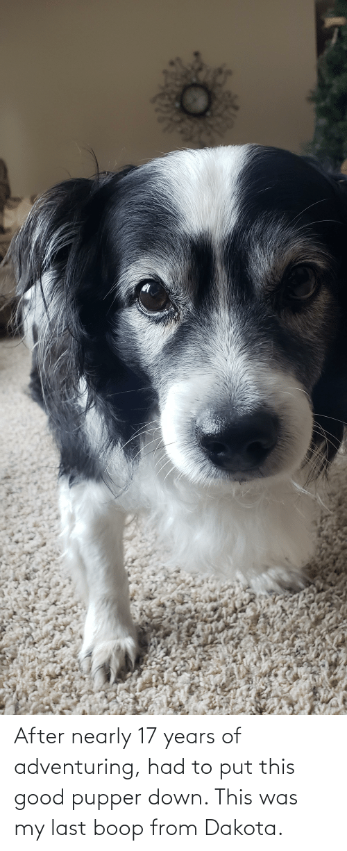 17 years: After nearly 17 years of adventuring, had to put this good pupper down. This was my last boop from Dakota.
