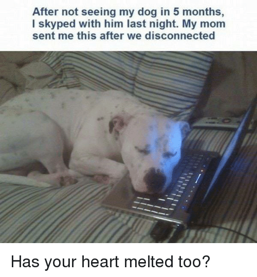 Heart, Mom, and Dog: After not seeing my dog in 5 months,  I skyped with him last night. My mom  sent me this after we disconnected Has your heart melted too?