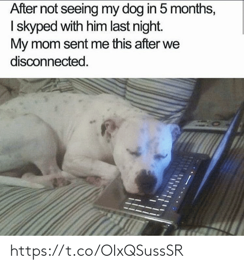 disconnected: After not seeing my dog in 5 months,  I skyped with him last night.  My mom sent me this after we  disconnected. https://t.co/OIxQSussSR