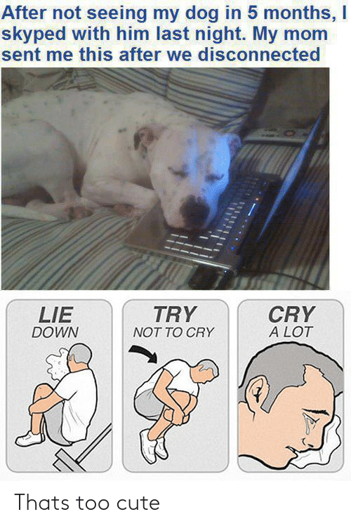 disconnected: After not seeing my dog in 5 months, I  skyped with him last night. My mom  sent me this after we disconnected  TRY  CRY  A LOT  LIE  DOWN  NOT TO CRY Thats too cute