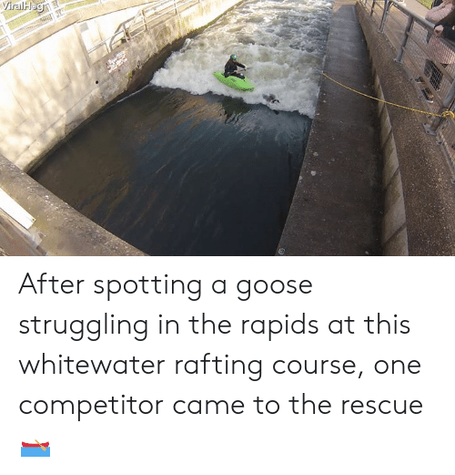 Rapids: After spotting a goose struggling in the rapids at this whitewater rafting course, one competitor came to the rescue 🛶