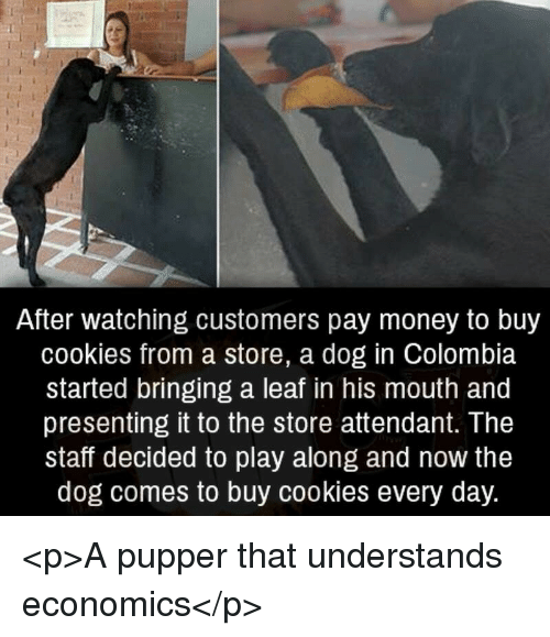 Cookies, Money, and Colombia: After watching customers pay money to buy  cookies from a store, a dog in Colombia  started bringing a leaf in his mouth and  presenting it to the store attendant. The  staff decided to play along and now the  dog comes to buy cookies every day. <p>A pupper that understands economics</p>