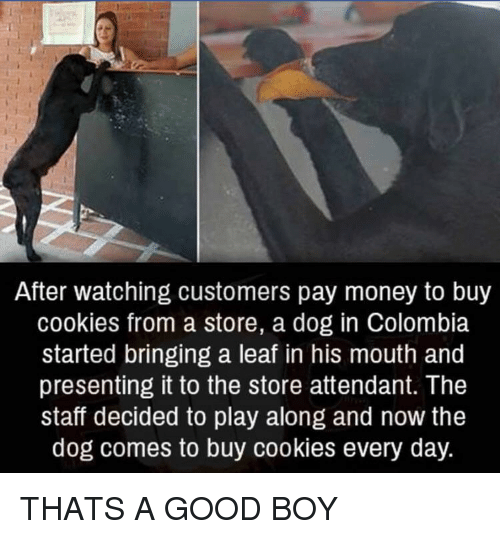 Cookies, Money, and Colombia: After watching customers pay money to buy  cookies from a store, a dog in Colombia  started bringing a leaf in his mouth and  presenting it to the store attendant. The  staff decided to play along and now the  dog comes to buy cookies every day. THATS A GOOD BOY