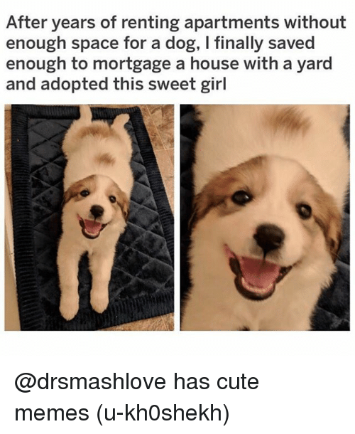 cute memes: After years of renting apartments without  enough space for a dog, I finally saved  enough to mortgage a house with a yard  and adopted this sweet girl @drsmashlove has cute memes (u-kh0shekh)