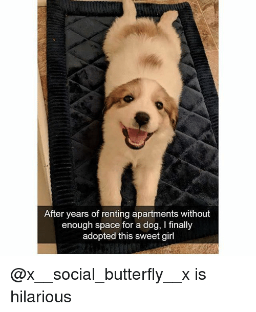 Funny, Butterfly, and Girl: After years of renting apartments without  enough space for a dog, I finally  adopted this sweet girl @x__social_butterfly__x is hilarious