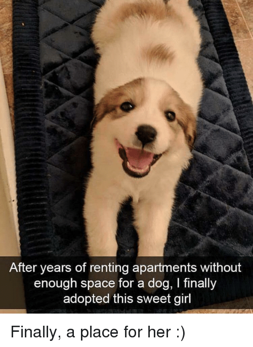 Girl, Space, and Her: After years of renting apartments without  enough space for a dog, I finally  adopted this sweet girl Finally, a place for her :)