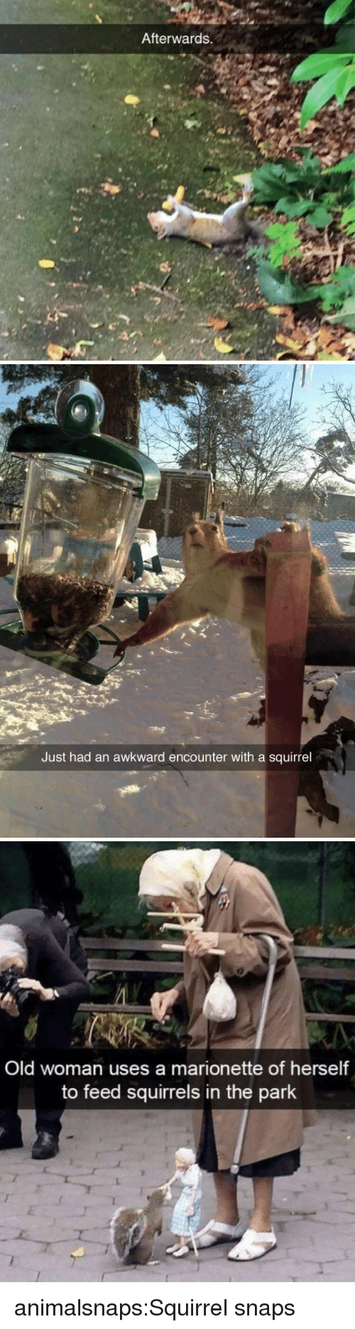 Old Woman, Target, and Tumblr: Afterwards.   Just had an awkward encounter with a squirrel   Old woman uses a marionette of herself  to feed squirrels in the park animalsnaps:Squirrel snaps