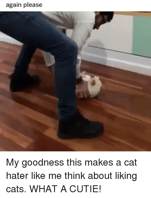 Cats, Funny, and Cat: again please My goodness this makes a cat hater like me think about liking cats. WHAT A CUTIE!