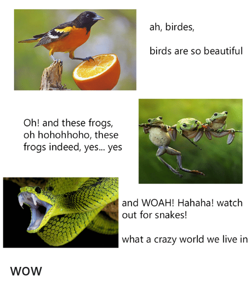 Beautiful, Crazy, and Dank: ah, birdes,  birds are so beautiful  Oh! and these frogs,  oh hohohhoho, these  frogs indeed, yes... yes  and WOAH! Hahaha! watch  out for snakes!  what a crazy world we live in wow