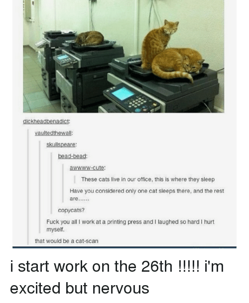 copycat: aickheadbenadict:  vaultedthewall:  skullspeare:  bead-bead:  WWWW-cute  These cats live in our office, this is where they sleep  Have you considered only one cat sleeps there, and the rest  are  copycats?  Fuck you all I work at a printing press and I laughed so hard I hurt  myself.  that would be a cat-scan i start work on the 26th !!!!! i'm excited but nervous