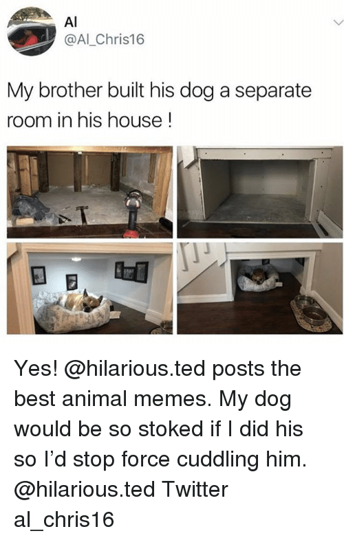 Memes, Ted, and Twitter: Al  @Al_Chris16  My brother built his dog a separate  room in his house! Yes! @hilarious.ted posts the best animal memes. My dog would be so stoked if I did his so I'd stop force cuddling him. @hilarious.ted Twitter al_chris16