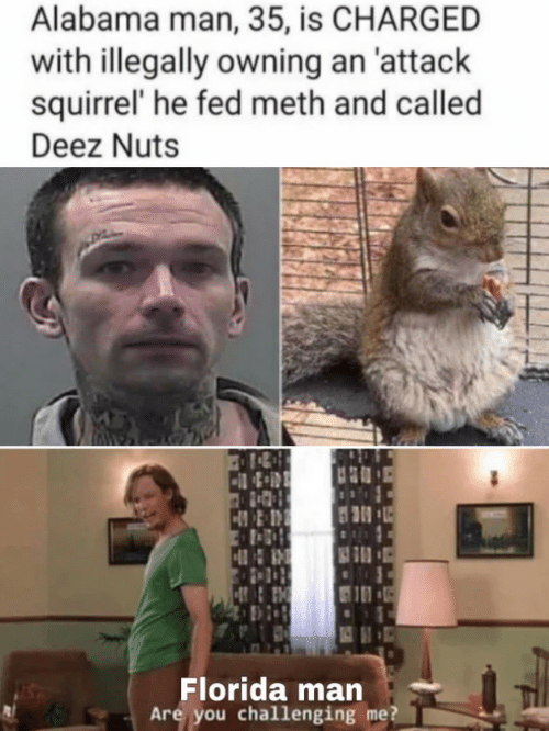 Deez Nuts: Alabama man, 35, is CHARGED  with illegally owning an 'attack  squirrel' he fed meth and called  Deez Nuts  Florida man  Are you challenging me?