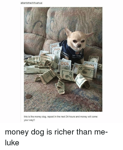 Money Dog: albertothechihuahua:  00L  this is the money dog, repost in the next 24 hours and money will come  your way!! money dog is richer than me- luke