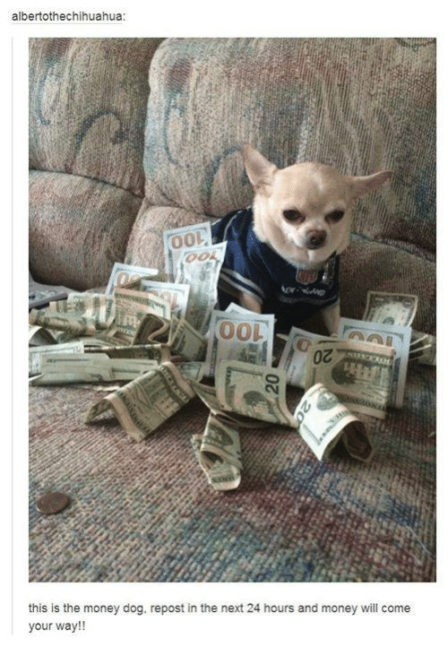 Dank, 🤖, and Next: albertothechihuahua:  00L  this is the money dog, repost in the next 24 hours and money will come  your way!!