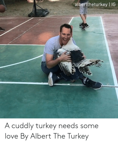 Dank, Love, and Turkey: alberttheturkey | IG A cuddly turkey needs some love  By Albert The Turkey
