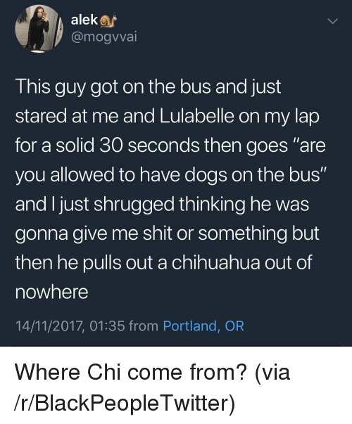 "Blackpeopletwitter, Chihuahua, and Dogs: alek  @mogvvai  This guy got on the bus and just  stared at me and Lulabelle on my lap  for a solid 30 seconds then goes ""are  you allowed to have dogs on the bus""  and Ijust shrugged thinking he was  gonna give me shit or something but  then he pulls out a chihuahua out of  nowhere  14/11/2017, 01:35 from Portland, OR <p>Where Chi come from? (via /r/BlackPeopleTwitter)</p>"